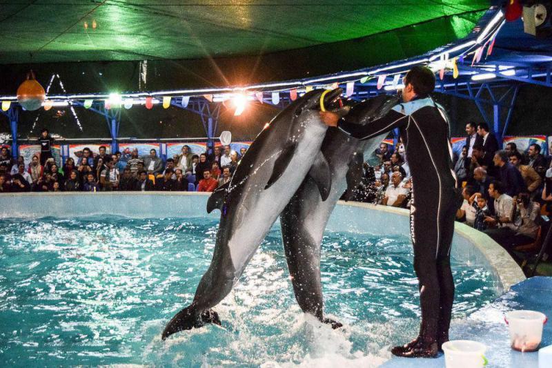 سرای دلفین های خوشحال